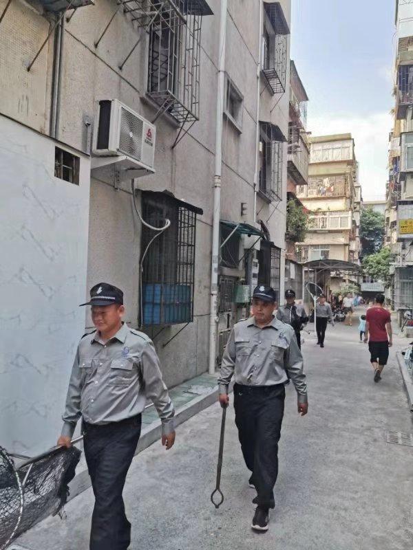 深圳一天收治流浪犬293只,查处无证犬只32宗_综合执法局
