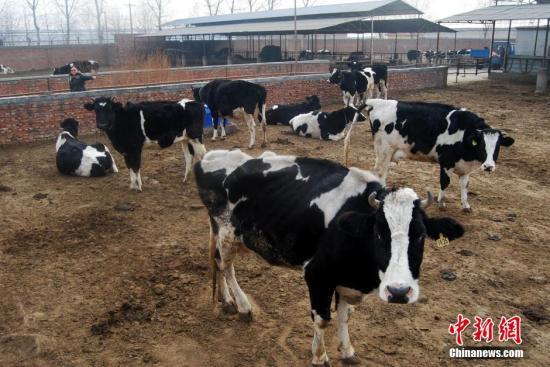 国产奶是不是能百分之百放心喝?农业农村部回应_质量