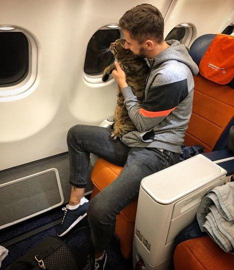 """猫太肥,俄罗斯男子为带猫上飞机""""偷天换日""""_米哈伊尔·加兰"""