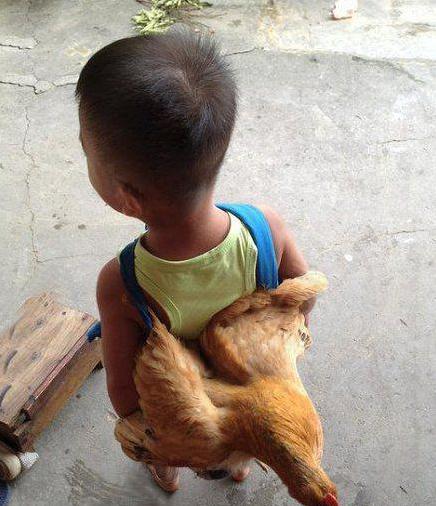 开心搞笑一刻:小朋友,你想背着母鸡去哪里? _段子