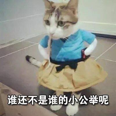 猫咪表情包合集|谁还不是谁的小公举呢_梦想