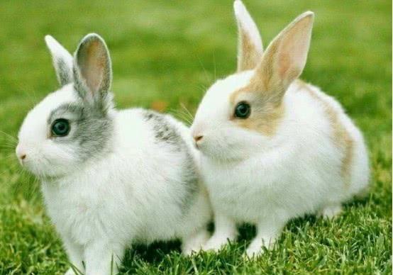 刚出生的小兔子,兔妈妈为什么会选择咬死它们?看完涨见识了
