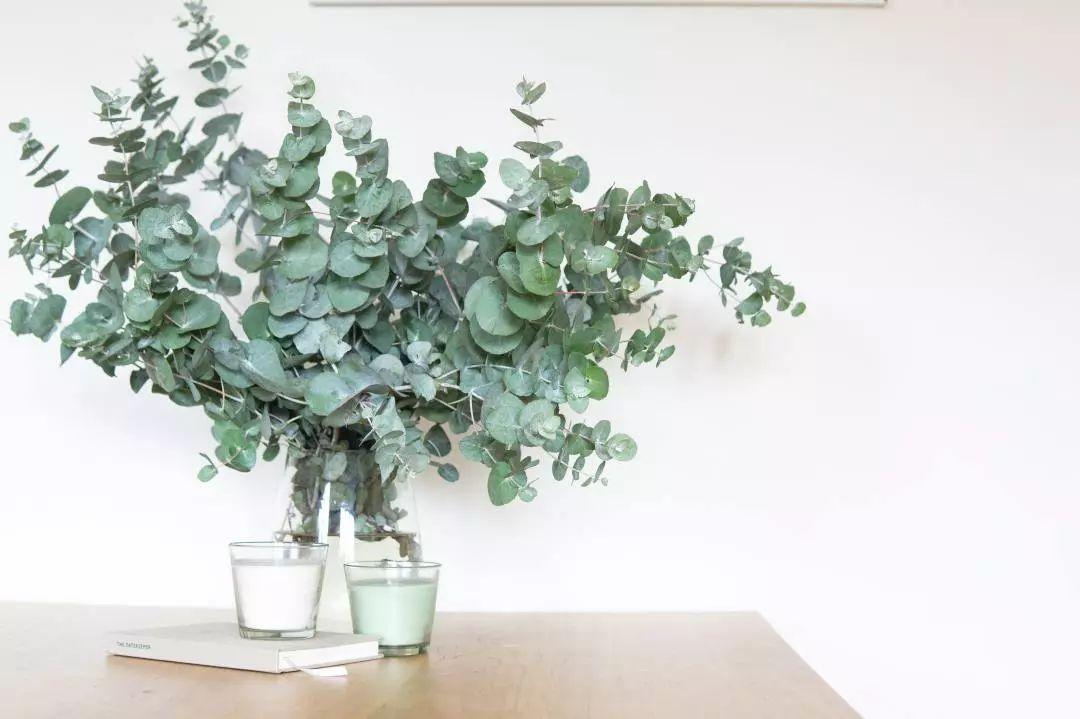 你跟风买的那些ins网红植物,死几盆了?_叶片