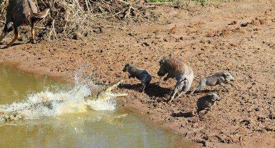 动物世界残酷厮杀画面合集