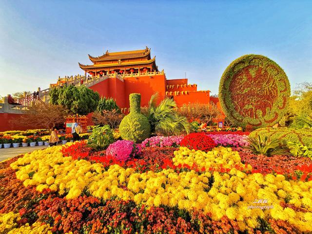 秋冬时节古都开封花开成海 别错过汴梁城最美的景