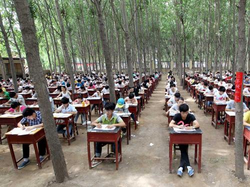 大类招生和实验班有什么区别?陈晟老师解读20年高考