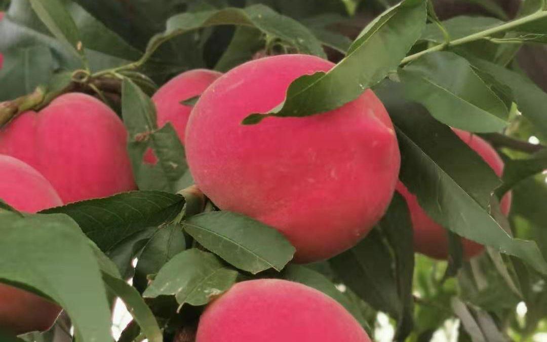 农产品区域公牌发布平谷大桃怀柔板栗等四品牌来自北京
