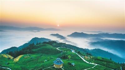 布央侗寨:風光宜人茶飄香