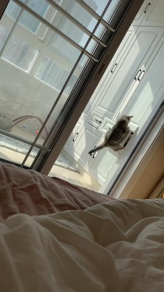 原创 猫站在抽屉前,接下来的动作令人看愣,网友:现在的猫可厉害了