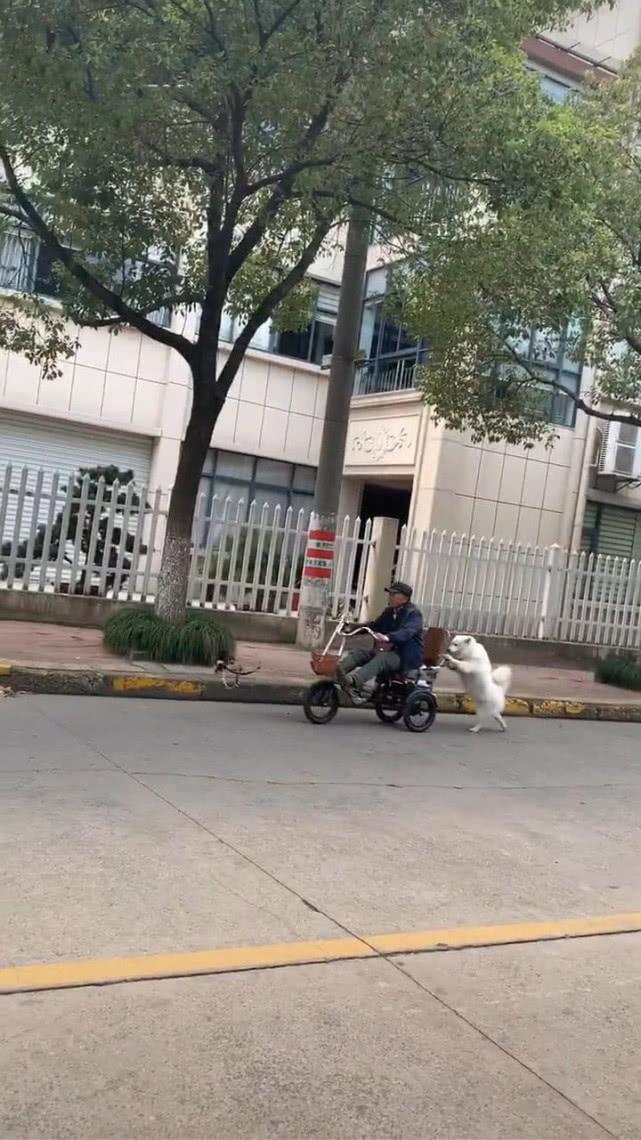 原创 大爷坐在车上,狗在后面推着,画面温馨,网友:狗是人最好的伙伴