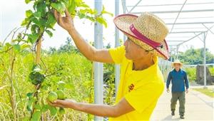 """海口龙华拓展农业产业链价值链促农增收产业""""接二连三""""经济""""多点开花"""""""