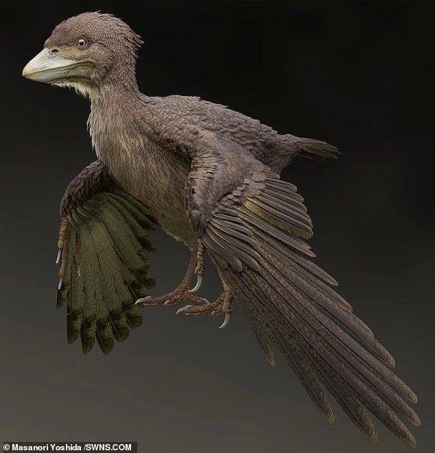 """日本首次发现恐龙时代""""鸽""""化石,比孔子鸟晚,或改写鸟类进化史"""