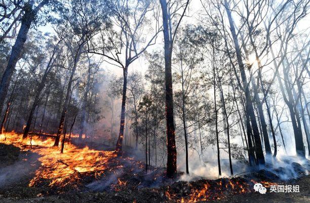 澳洲350只考拉被活活烧死,意大利威尼斯被淹,世界怎么了?_火灾