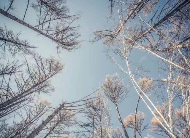 国内适宜过冬的3个城市,气候温暖景色宜人,网友:暖和