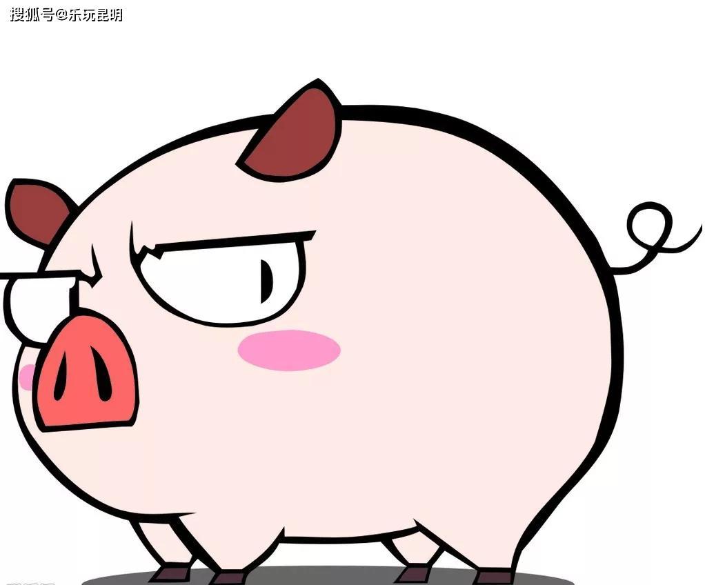 猪吃饲料图片