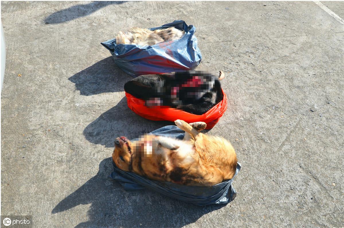 太残忍!4人结伙流窜毒狗,被抓时后备箱已有3条狗被毒杀