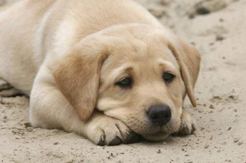 狗狗便秘怎么办 狗狗便秘吃什么好