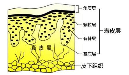 蛋白线提升的原理_蛋白线面部提升术的工作原理是什么