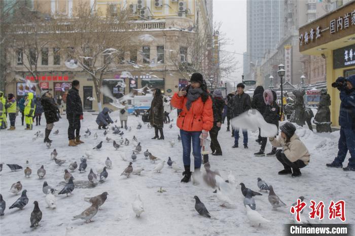 """黑龙江暴雪来袭:游客""""以雪为令""""赏冬景 图3"""