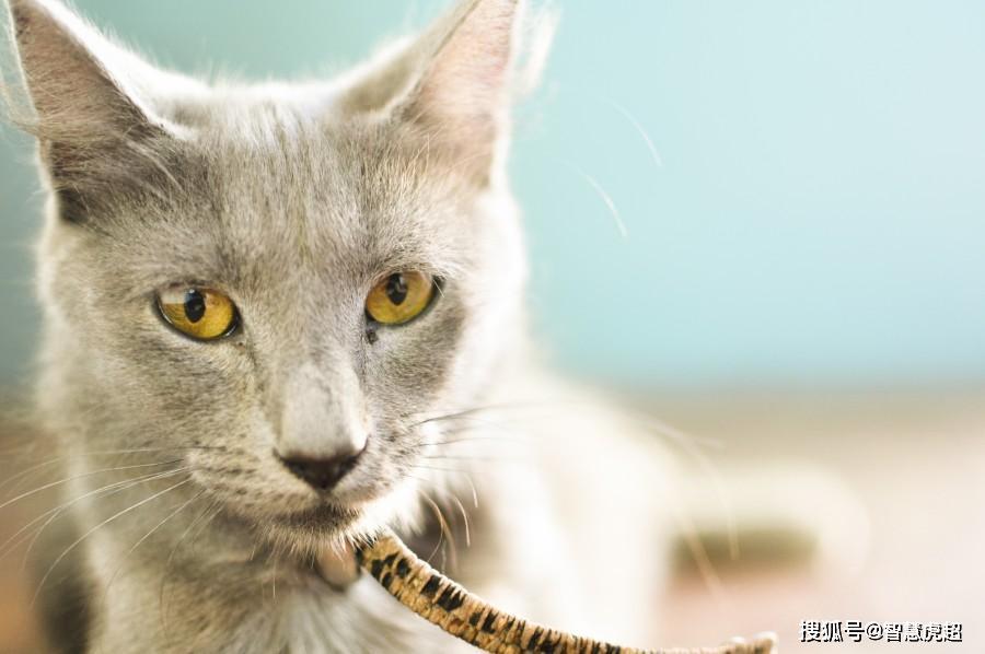 智慧虎超:移动互联网时代小程序如何赋能宠物行业?