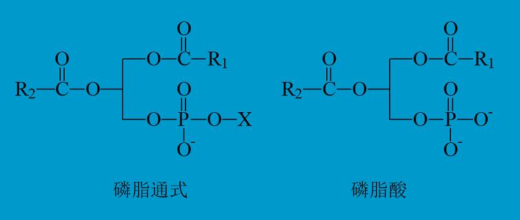 磷脂是什么 磷脂是什么添加剂对人体有没有危害?
