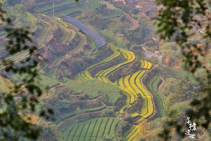 """浙江上田村被誉为""""民宿村"""",这里的村庄都被改造成了民宿"""