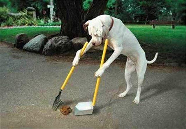 养宠物的人很多,路上遗矢随处可见,独佩服上海的一位老伯的做法