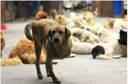 因为瘫痪,它被主人扔在零下室外,获救后狗宝宝流泪模样让人感动...