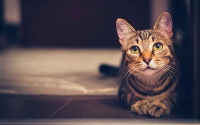 给猫咪洗澡攻略来袭!洗澡再也不是恶战