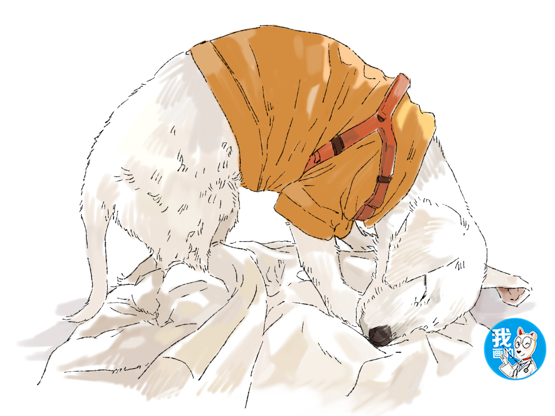 原创 收养了一条流浪狗,夜里总传来奇怪的声音,开灯一看觉得心疼