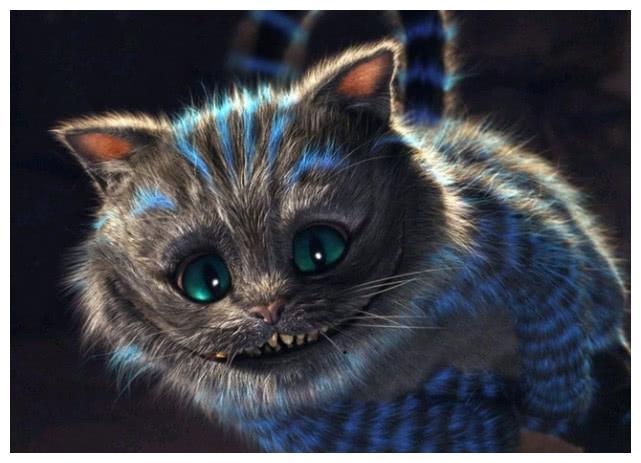 猫猫到底是聪明还是傻?傻的时候气疯人,聪明的时候让人抓狂