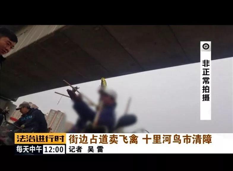 十里河:小贩公然占道卖飞禽,终于被清理