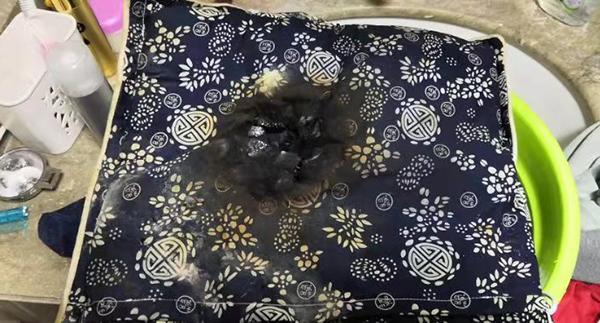 女子称网购电热垫充电时自燃,商家:产品已下架,需寄回检测_陈女士