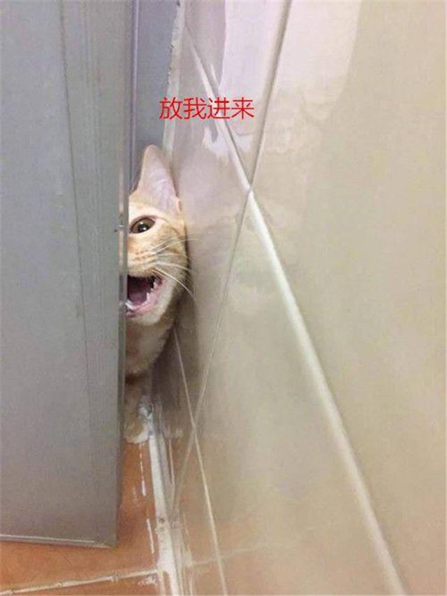 女子在家洗澡,不料厕所的门竟被打开:女人看清后反而被逗笑!