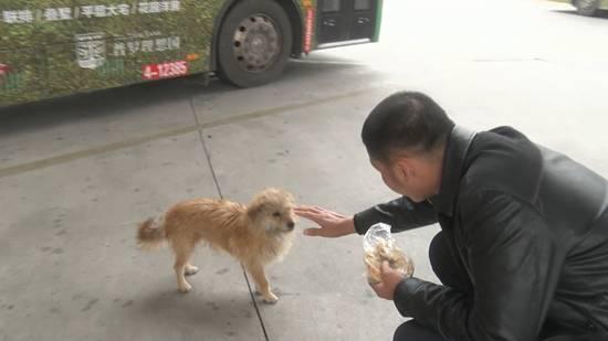 郑州:公交车长发车前都要做这件事,真相让人感动......