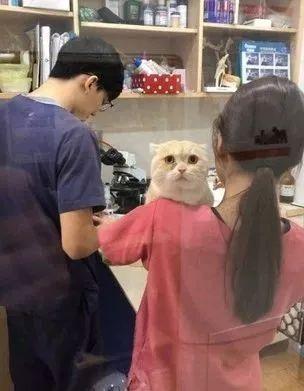 爷爷带猫看病花了1000块,结果X光只照到三颗屎!