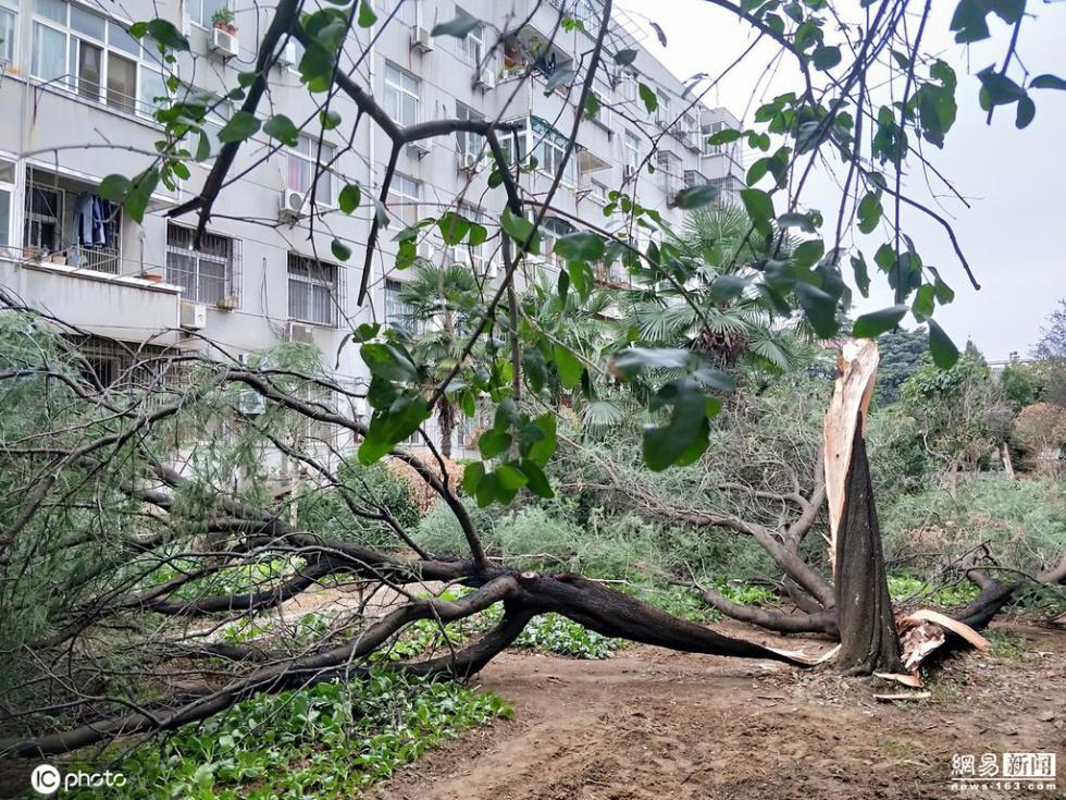 传奇游戏名湖北孝感阵风7到9级 粗壮大树被刮断