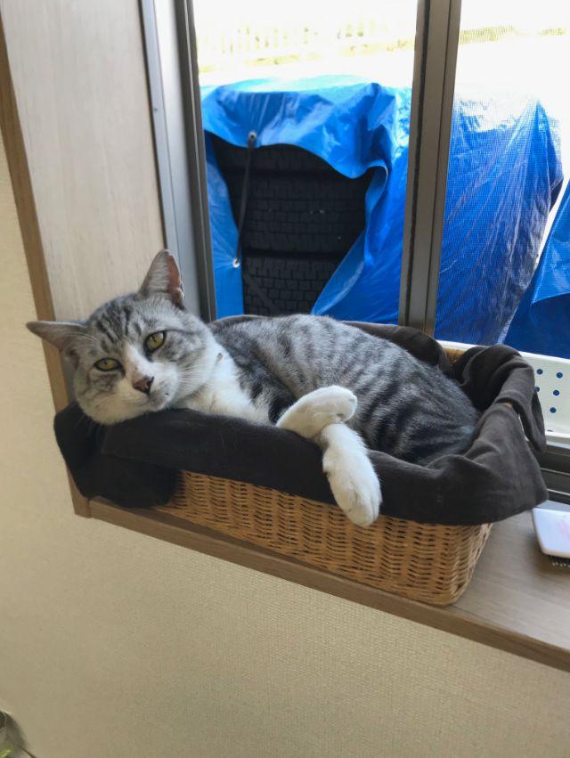 公司捡到的流浪猫无人认领,短短3个月就散发出一股总裁气息!
