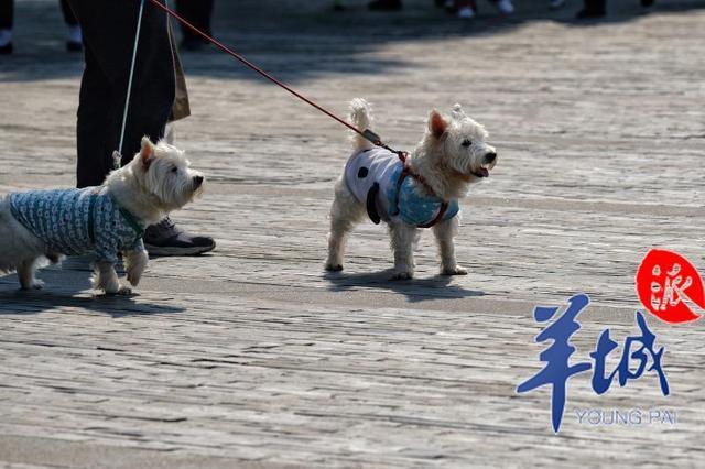 广州拟重拳治犬!未登记罚两千,未牵绳伤人罚一万