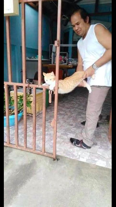 到了中午吃饭点了,猫咪却扒着铁门不愿回家,真正的赖皮猫!