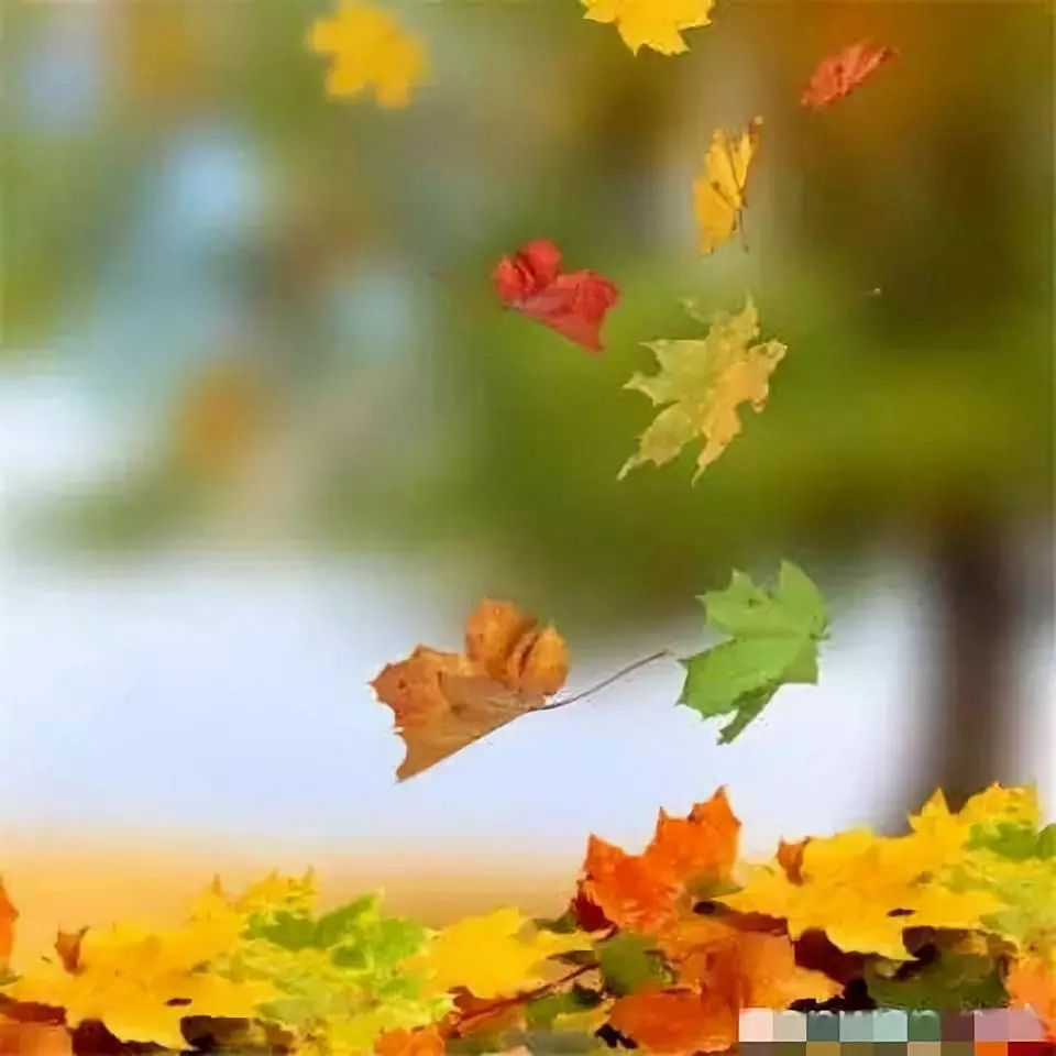 秋天落叶简笔画