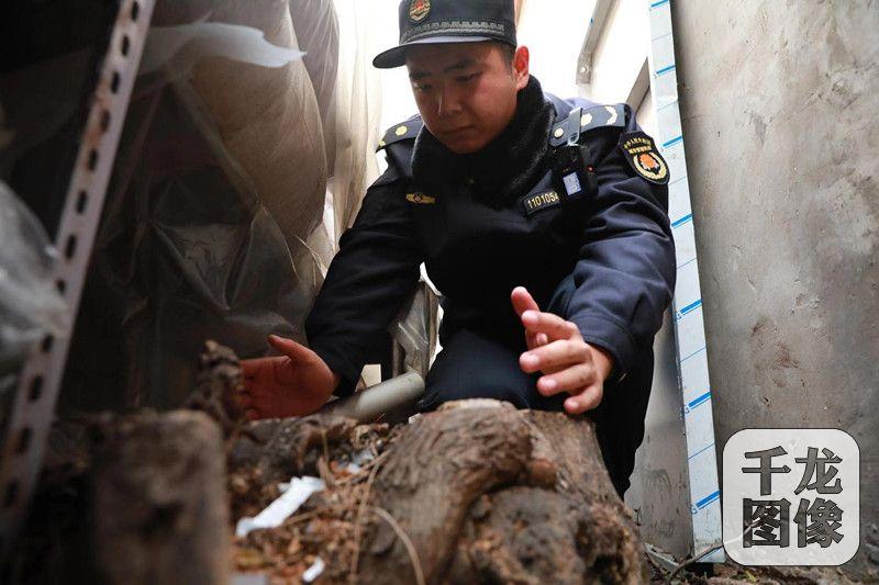 私伐老树?北京东城城管开出树价损失8倍万余元罚单_交道口街道