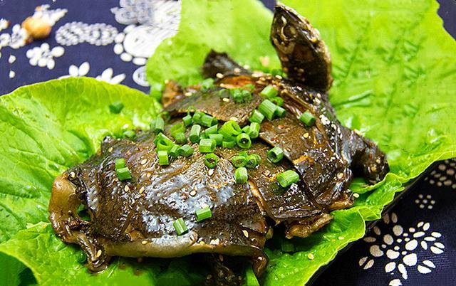 乌龟和甲鱼这么像,为啥大家爱吃甲鱼,却很少吃乌龟,它不香吗?