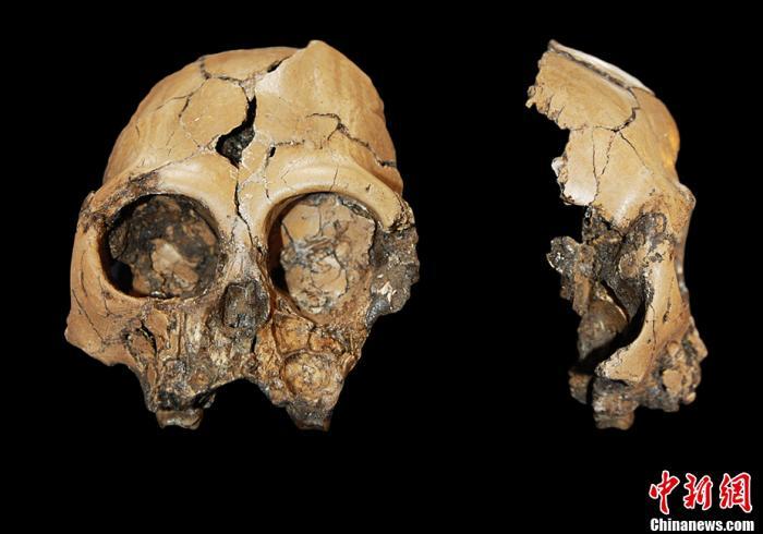 """""""像人又像猿""""的化石被发现能证明进化论错误吗?_进化史"""