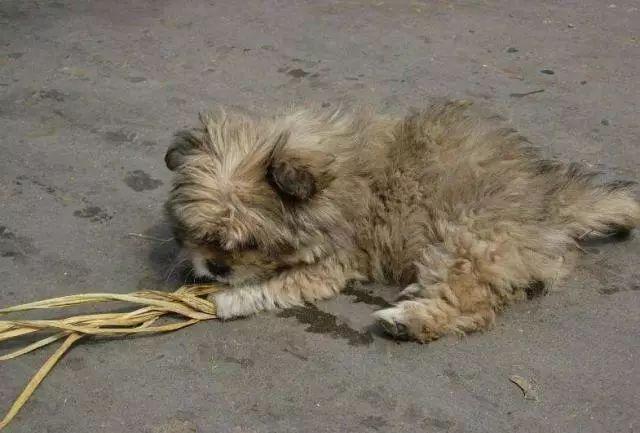 狗狗被主人扔掉后,用主人教过的动作,小心翼翼向路人乞讨