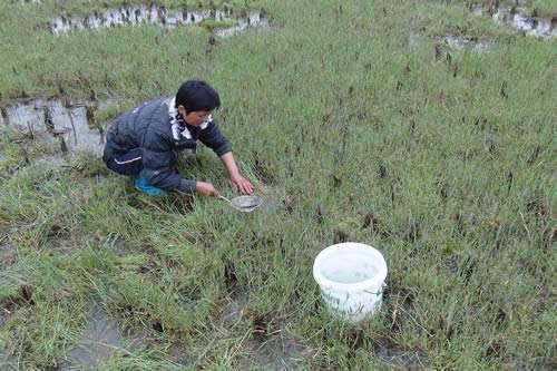 """食材界""""大熊猫"""":这种藻类,营养比燕窝还高,能卖到1000一斤"""