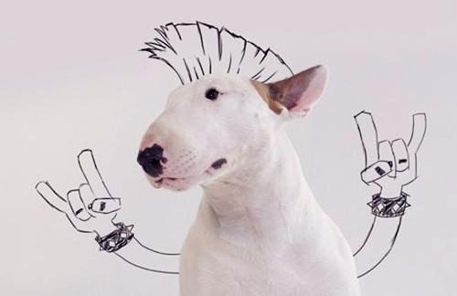 原创 【养宠经验分享】牛头梗幼犬出现拉稀的情况,会死吗?