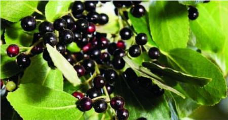 """被誉为世界级的超级能量水果,有一种是亚洲""""果后"""""""