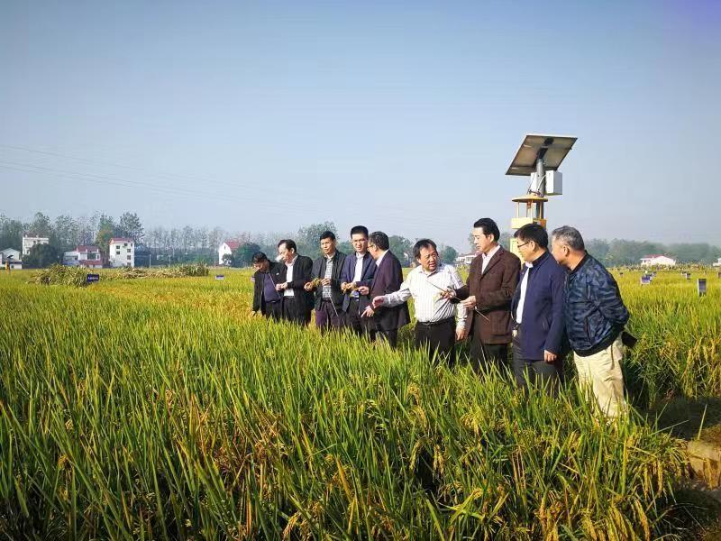 畝產1365公斤!我國長江中游雙季稻產量創新高_示范