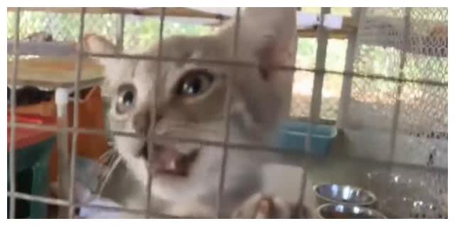 2只比特犬被主人抛弃,被收留进收容所,半夜竟咬死29只猫咪